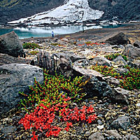 Crowberrys and Glacier